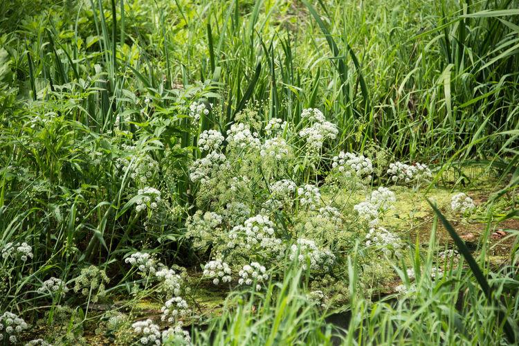 Green Green Green!  Flowers Grassy Summer 夏の昼間 白い花 福島の草 草