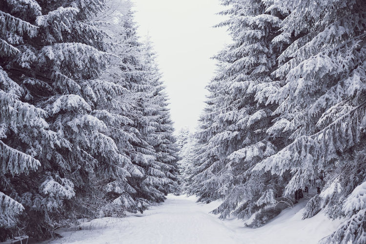 Cold Temperature Day Forest Nature No People Outdoors Scenics Snow Snowing The Way Forward Tree Winter
