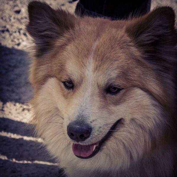 Dog Beautiful Light And Shadow Cute