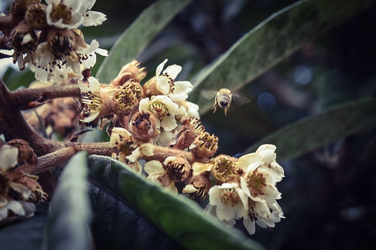 Bee Bees Flowers Nikonphotography Nikond5300 DSLR HDR Nikon
