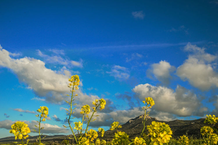 Beauty In Nature Blue Cloud - Sky Flower Nature No People Plant Sky Yellow