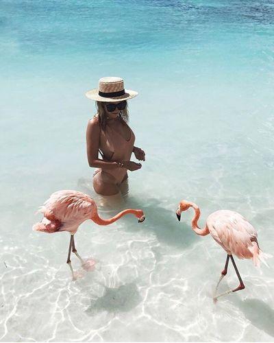 Animal Themes Water Bird Animals In The Wild Sea Three Animals Outdoors Animal Wildlife Beach No People Nature Flamingo Perching
