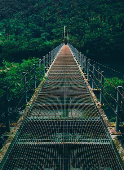 Footbridge leading towards forest