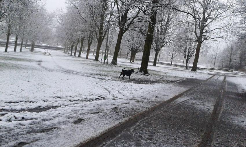 Heute morgen in MG, In Deutschland In Germany Hunderunde EyeEm Dog Lover Dogs Of EyeEm Schnee Am Morgen Dog Walking The Week On EyeEm Welcome To Black