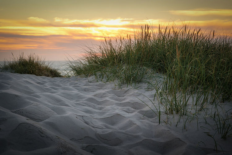 Dune at bjerregard beach Sunset Sky Beauty In Nature Tranquility Scenics - Nature Plant Land Tranquil Scene Nature Cloud - Sky No People Growth Sand Grass Beach Orange Color Water Idyllic Outdoors Marram Grass Dune Grass Travel Destinations Denmark EyeEm Best Shots
