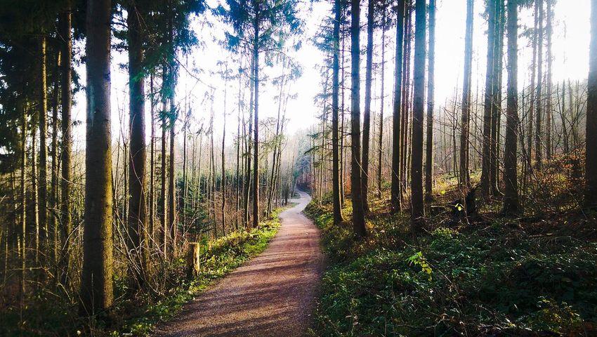 My way .... Running Running 2015 Waldweg Wood Nature Outside