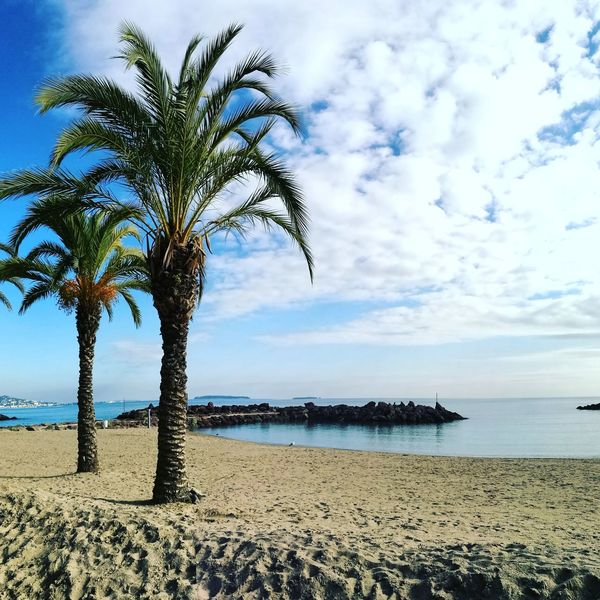 Détente Sea Beach Water Palm Tree Horizon Over Water Tranquil Scene Sky Scenics Blue Nature Sand Beauty In Nature Outdoors Day City No People HuaweiP9Photography Secret Garden HuaweiP9 Landscape Huawei P9 Leica Picsoftheday Bestmoment