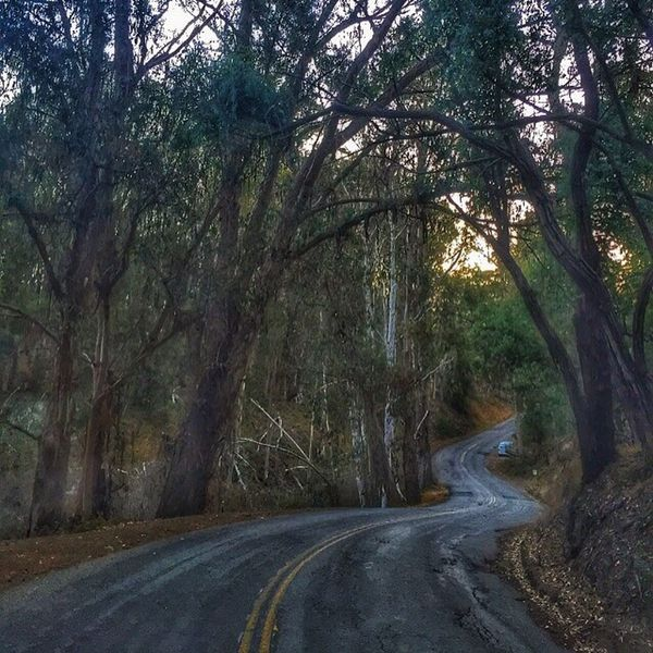 I always prefer the road less traveled....  Nature_collection California Coast Lososos Montanadeoro California Naturelovers Enjoying Life Home Sweet Home Beach Life Trees Road State Park  Livingthegoodlife Livingthesimplelife Livingthedream Surfing Surf Hidden Gems