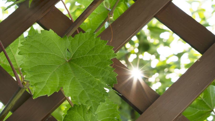 Low angle view of green leaves on sunny day