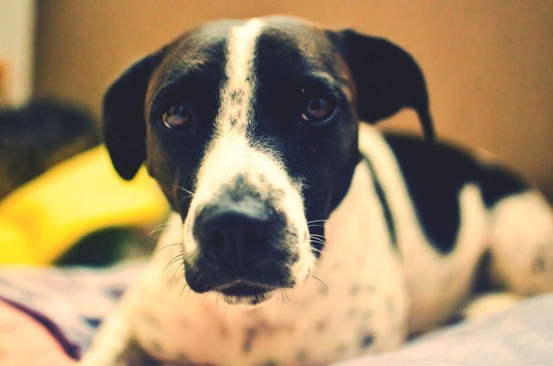 Ella Beagle