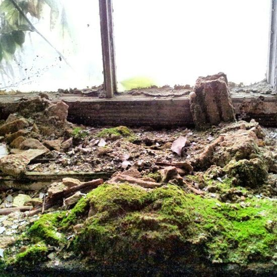 #Moss inside Urbex Organisedgrime Photooftheday Mossporn Moss Instaart Partnersingrime Filthyfeeds Grime Urbanexploration Findingbeautyoutofshit Light Lostplaces Abandoned Filthyfamily Derelict Urbanex Window Sfx_urbex Color Lostplace Decay Detailsofdecay Rotten Beautymess Dark Beautifuldecay