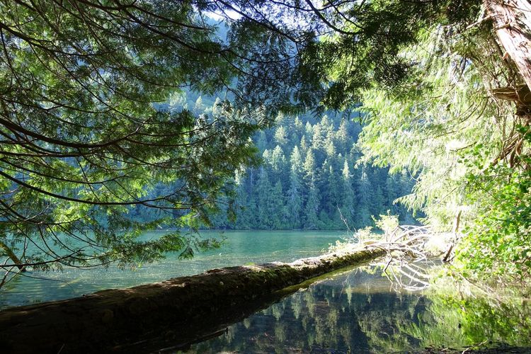 Cathedral Grove Vancouver Island Canada Road Trip Abventure Exploring Travel Relaxing Sunlight Freshness Emeraldgreen Lake Tree Nature