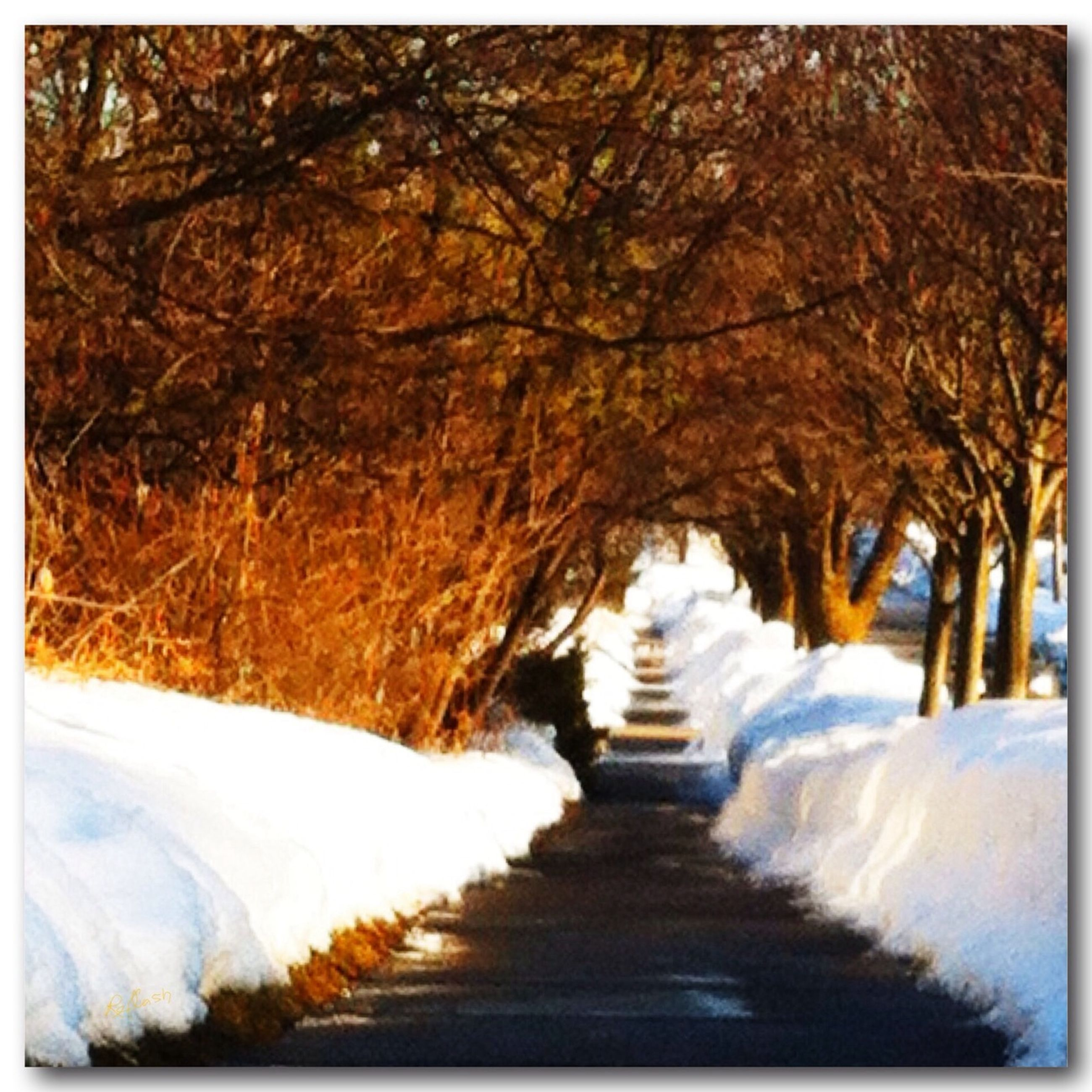 snow, winter, cold temperature, the way forward, tree, season, diminishing perspective, weather, covering, tranquility, nature, tranquil scene, vanishing point, auto post production filter, beauty in nature, transfer print, covered, forest, scenics, road