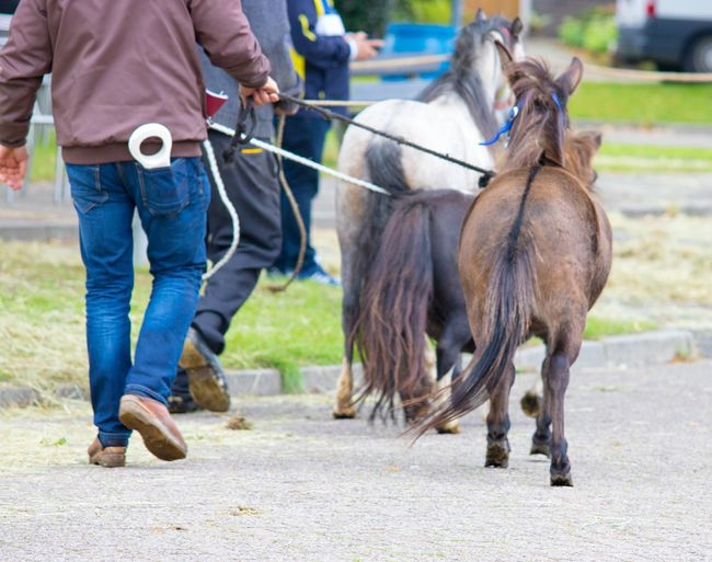 Abused Abused Horse Casual Clothing Day Domestic Animals Focus On Foreground Herbivorous Horse Horse Market Leisure Activity Lifestyles Livestock Maltreatment Mammal Outdoors Skinny Standing Tread Bat Working Animal