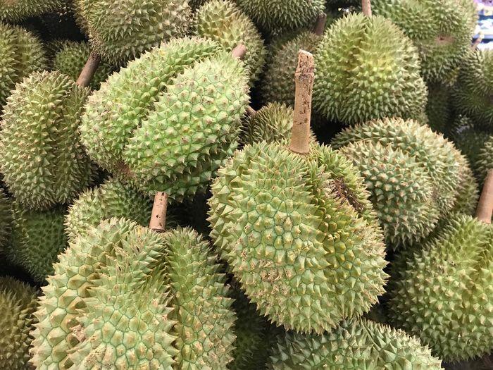 Thai Fruit Fruit Durian Growth Plant Green Color Cactus Succulent Plant Nature