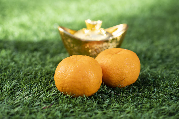 Close-up of orange fruit on grass