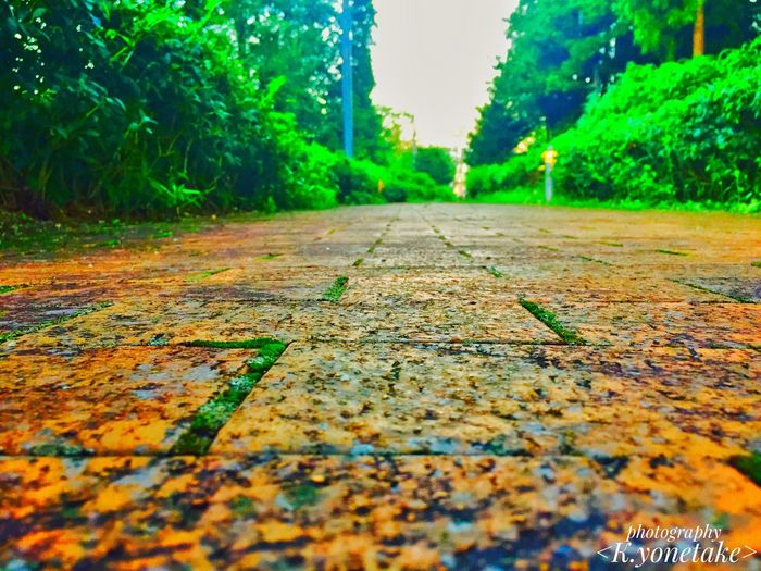 The way when living, isn't straight, but I think it faces to the front hard and is the case that it's important to take 1 first step🤔💭 The Way Leaf Life Tree Green The Long Road The Long Life No People Green Color Outdoors Forest Nature Collection Long Day Time Beauty In Nature Photo Photography Photographer ファインダー越しの私の世界