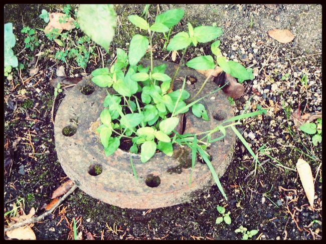 The flower on Monserrate.. ¡Eyeem Addict! Historical Sights Walking Around Uploading Photos