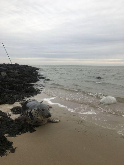 Seals Sea Water