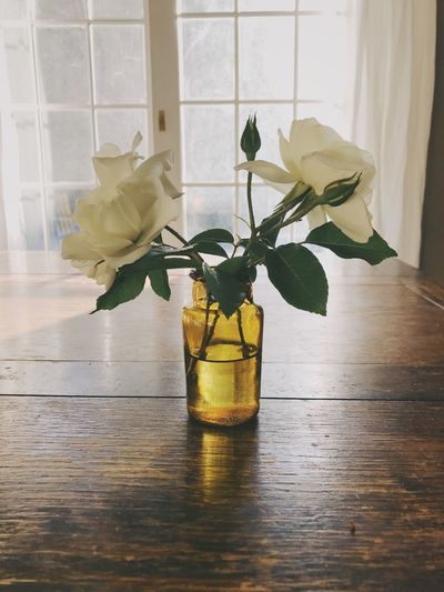 Curtains Interior Home Decor Glass Jar Window Light Table Flowers Roses Vase Indoors  Flower Glass - Material Plant Flowering Plant Glass Container