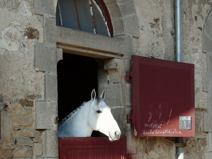 Stable One Head Horse Head White Head Mane One Horse Twice Door Built Horse Stable Rusty One Window Rock Wall Red Doors Text Medic  Horse Mane Horse Photography  In France