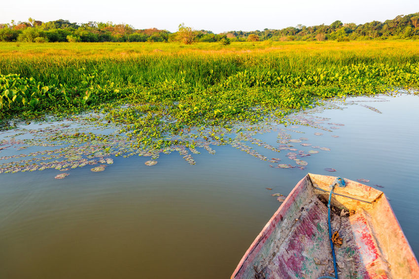 Canoe next to a lush green lakeshore in Madidi National Park in Bolivia Amazon Beni Bolivia Canoe Canoes Countryside Day Foliage Forest Jungle Lake Landscape Madidi National Park National Park Nature Outdoors Park Rainforest River Rural Scene Rurrenabaque Scenics Tree Water Wilderness