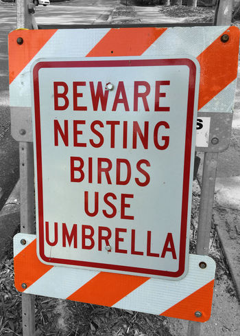 Beware Birds Black & White Black And White Blackandwhite Bokeh Bokeh Photography Caution Close-up Colors Day Forbidden Information Information Sign No People Orange Outdoors Pole Red Road Sign Safety Selective Color Selective Focus Text Western Script