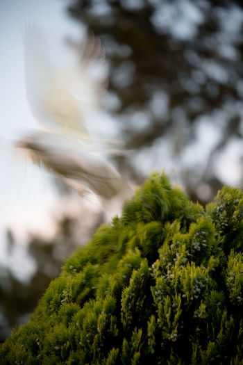 Catch me if u can..... Fly Away Bird In Flight Catch Me If You Can Close-up Go Away Nature No People Tree EyeEmNewHere