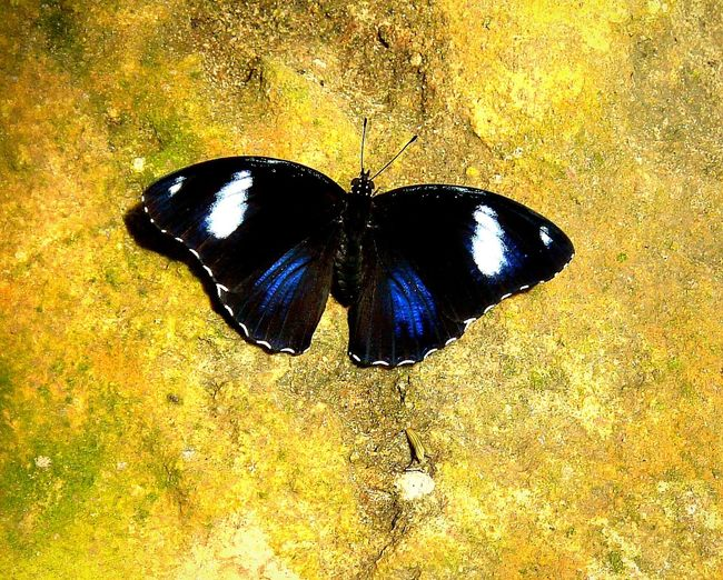 Black Magic ~ Butterfly - Insect Animals In The Wild No People Insect Animal Themes Close-up Day Outdoors Nature Beauty In Nature Butterfly The Week On EyeEm Beauty In Nature South Africa Cape Province Rock Formation Butterfly Collection Wings Spread