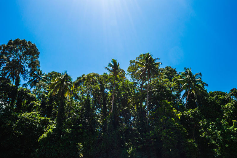 Malinau - North Kalimantan Trees Beauty In Nature Blue Day Forest Green Color Growth Low Angle View Nature No People Outdoors Plant Scenics - Nature Sky Sunlight Tranquil Scene Tranquility Tree Adventures In The City