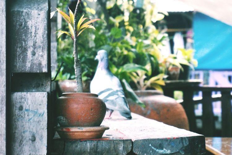 Bird Bangkok