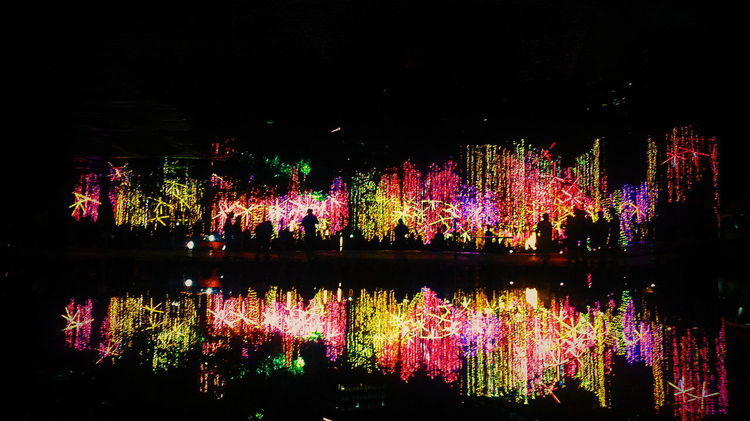 From My Point Of View the ayala garden light show Lights Silhouette Water Reflection