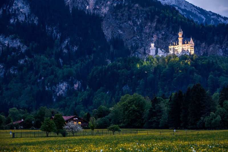 Schloss Neuschwanstein Allgäu Castle Disney Neuschwanstein Schloss Architecture Bayern Building Exterior Built Structure Germany History Nature Outdoors