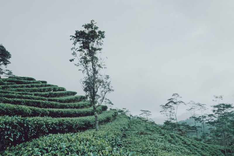 EyeEm Gallery TheWeekOnEyeEM EyeEm Best Shots EyeEmNewHere Travel Traveling Landscape INDONESIA Plant Growth Tree Sky Nature Green Color Tranquility Environment Scenics - Nature Outdoors Field Landscape Rural Scene No People Land Tranquil Scene Beauty In Nature Day Agriculture Crop