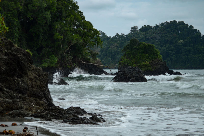 Growth Manuel Antonio Beauty In Nature Day Jungle Nature No People Outdoors Rock - Object Scenics Sea Tranquil Scene Tranquility Tree Water Waves Waves Crashing