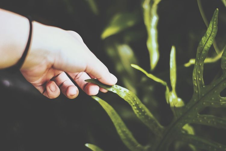 Close-up of young man hand holding plant