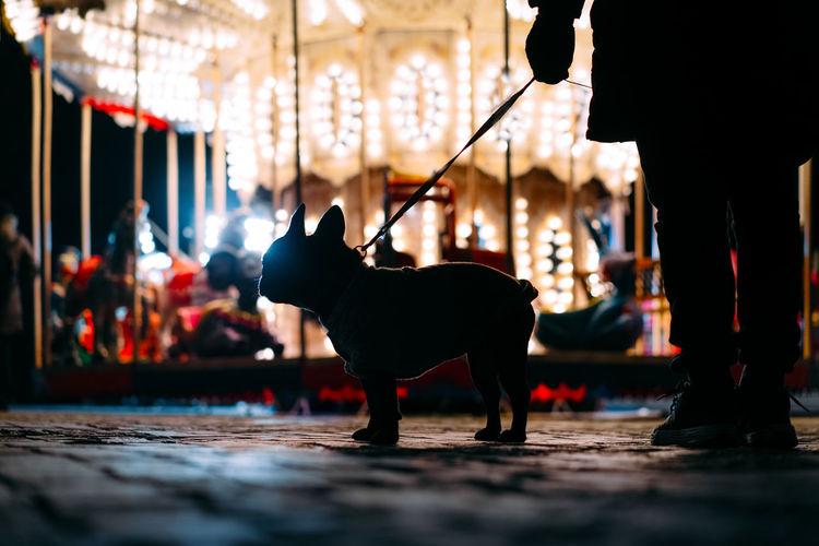 French bulldog by illuminated carousel at night