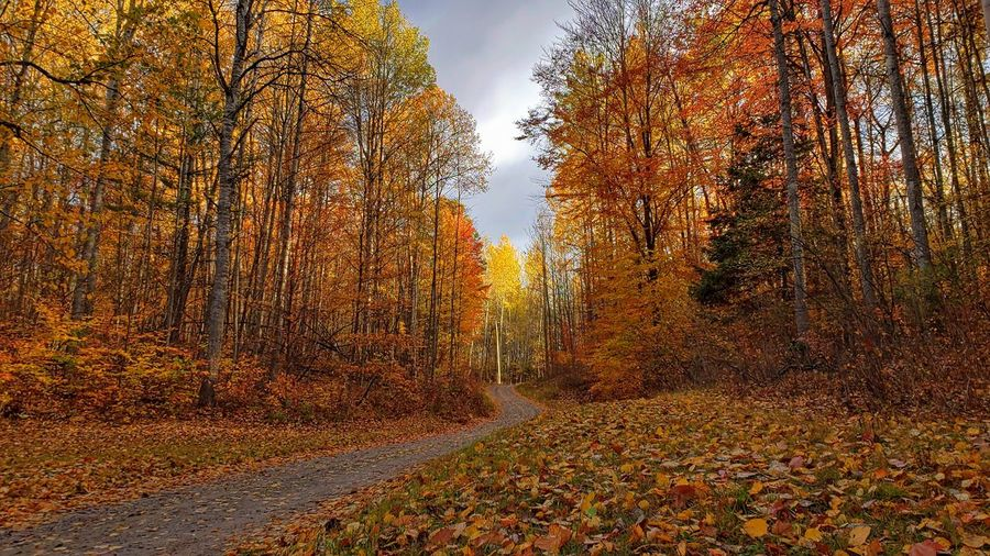 Scenic view of autumnal trees during autumn