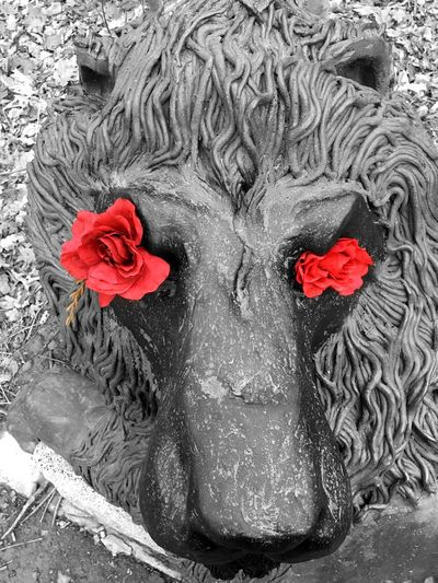 Lion Cemetery Red Primary Colors Blackandwhite Check This Out Roses Flowers taken in Oakwood Cemetery, Syracuse Colorsplash Color Splash