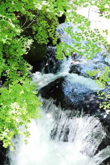 River View Japan Backgrounds Copy Space Green Green Green!  Green Nature Green Water Plant Tree Nature Day Growth No People Beauty In Nature Motion Green Color Outdoors Land Tranquility High Angle View Forest Scenics - Nature Sunlight Plant Part Leaf Flowing Water