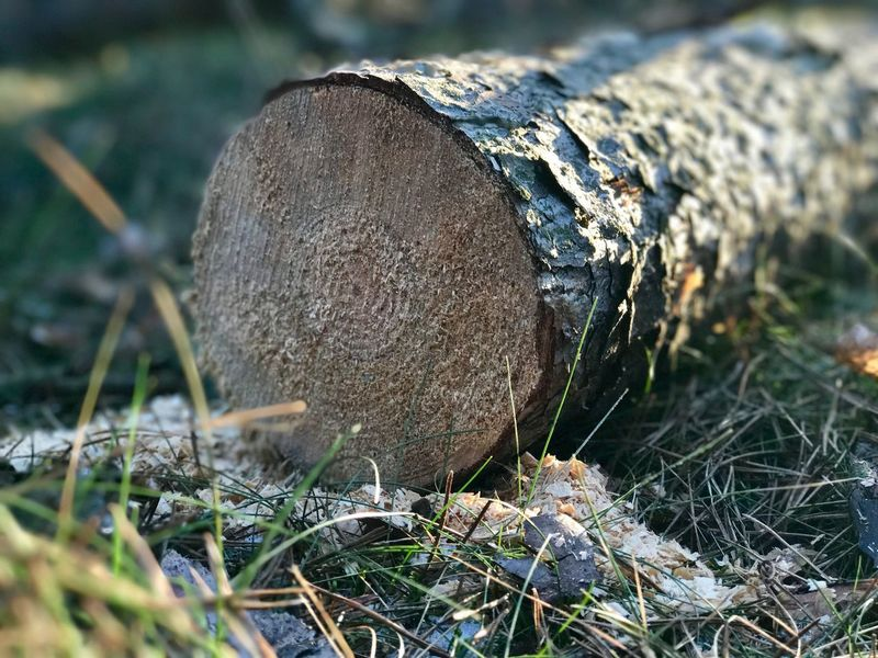 Lumberjack was here! Log Wood - Material Environmental Issues Timber Deforestation Fossil Fuel Nature Close-up Woodpile Lumber Industry Environmental Damage Tree Ring No People Axe Outdoors Day Forestry Industry