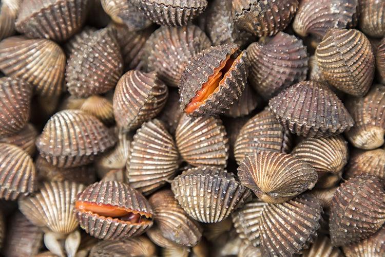 Full frame shot of clams