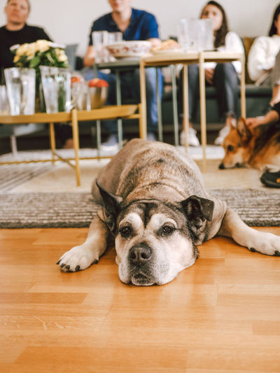 Dog relaxing on table