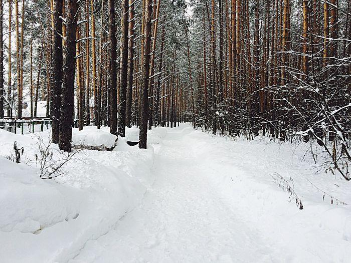 Snow ❄ Forest Traveling путешествия Томск Trees TreePorn Hugging A Tree