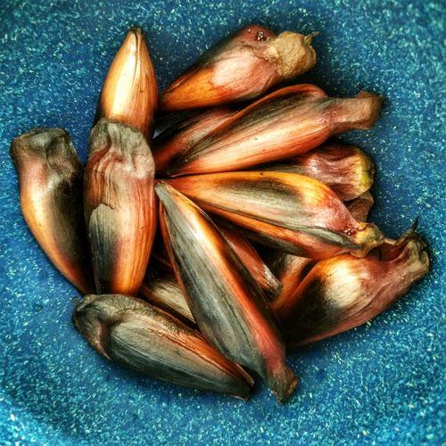 Fried araucaria