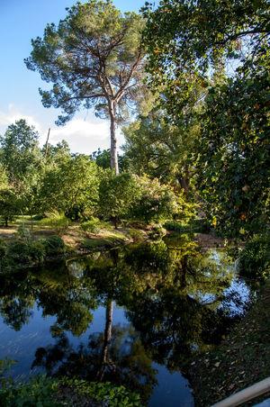 Passeggiata ai giardini di Ninfa Nature Ninfa Gardens Plant Flower Landscape Latina Nature_collection Ninfa Water