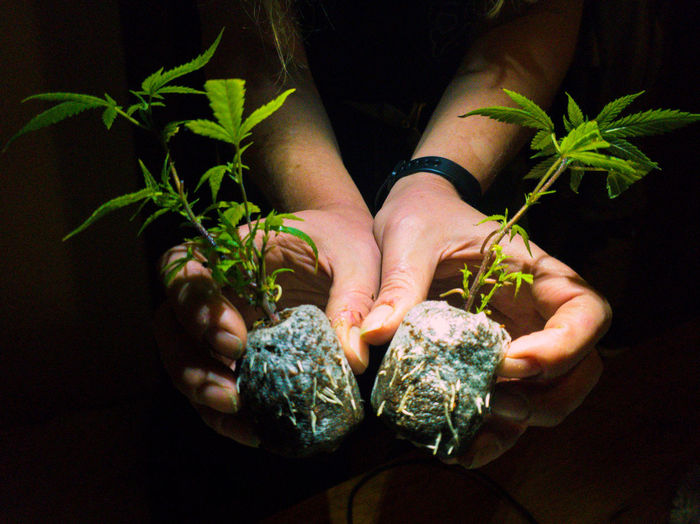 Close-up of hand holding seedling