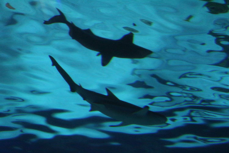 Low angle view of fish swimming in aquarium