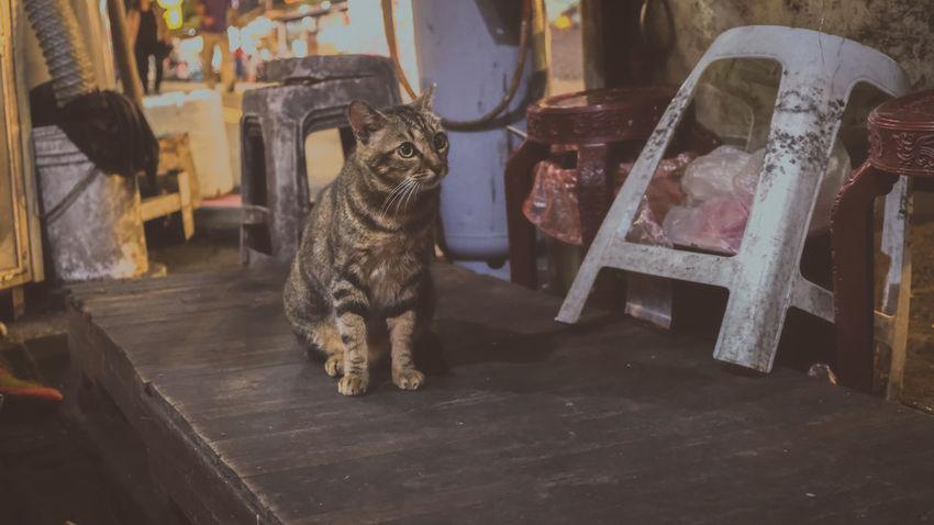 貓星人 喵星人 猫の写真 Hkcats Katze Cat♡ 貓 Gato Meow 猫 Chat Cats Cat Photography Neko Meow🐱 Cats 🐱 Kot 貓咪 Cats Lovers  Gatto Cat Lovers Stray Cat 野良猫 Cat Cats Of EyeEm