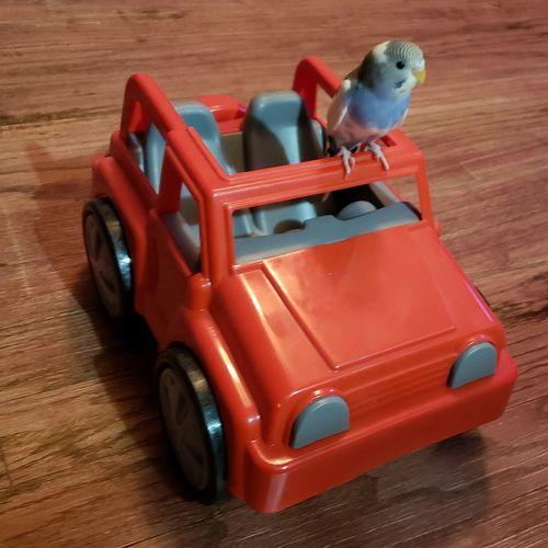 Red Bird Toy